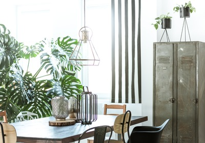 Must-Have Summer Indoor Plants