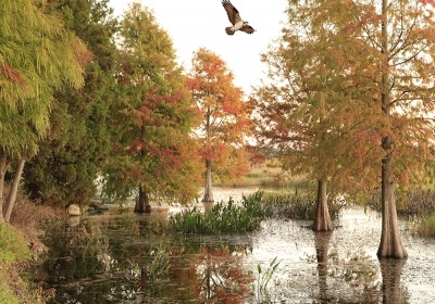 Florida in the Fall: Why We Love a Change of Season